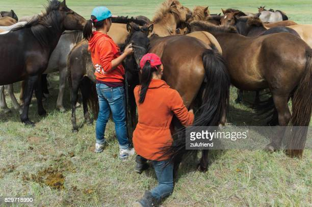 milking mares in mongolia - mongolian women stock photos and pictures