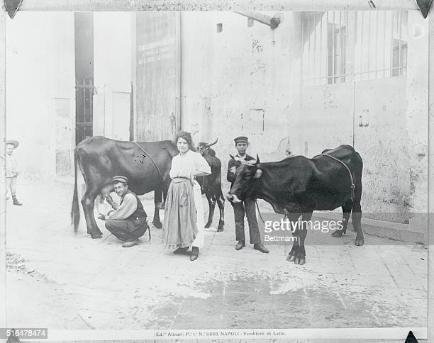 A Milkman of Naples is shown with man milking one of two cows in the street with his son and wife nearby