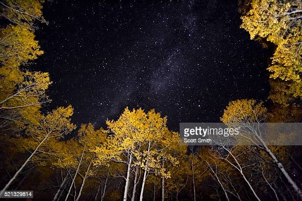Milky Way and starry sky above aspen trees.