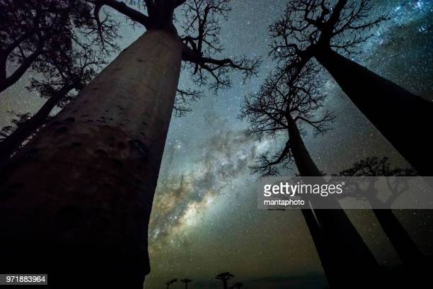 milky way at avenue of the baobabs - madagascar stock photos and pictures