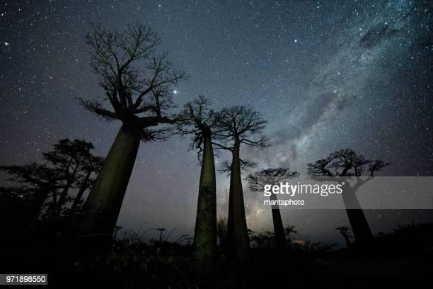 vía láctea en la avenida de los baobabs - imperial system fotografías e imágenes de stock
