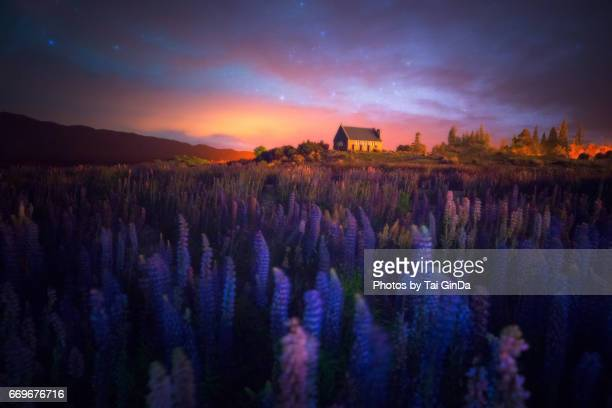 Milky way at the Church of the Good Shepherd with blooming lupine in Lake Tekapo in New Zealand.