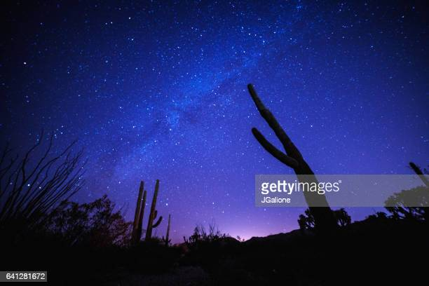 Milky way behind the silhouette of a cactus