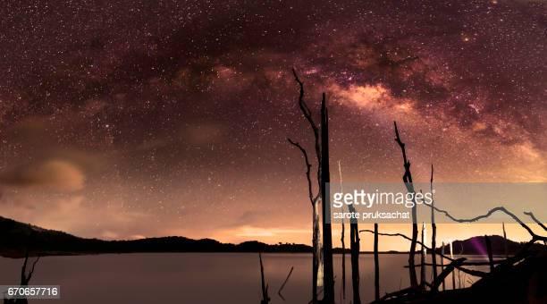 milky way galaxy and Perennial dead tree
