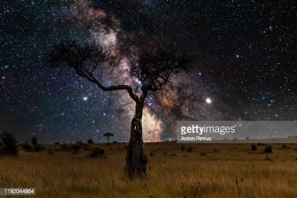 milky way in the african savannah with acacia trees, safari in serengeti of tanzania. - night safari stock pictures, royalty-free photos & images