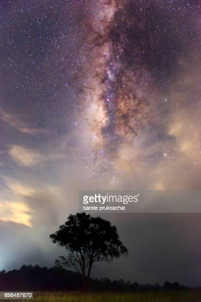 Milky way night sky with alone tree .
