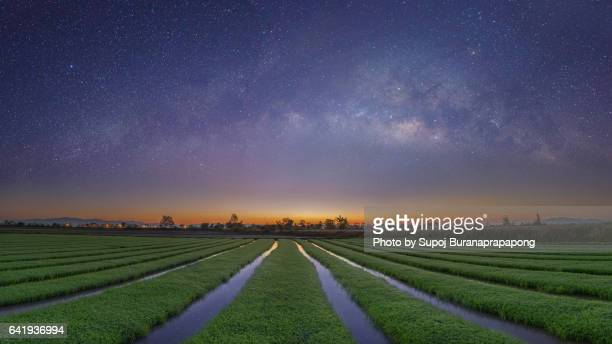Milky Way on the rice terrace before sunrise