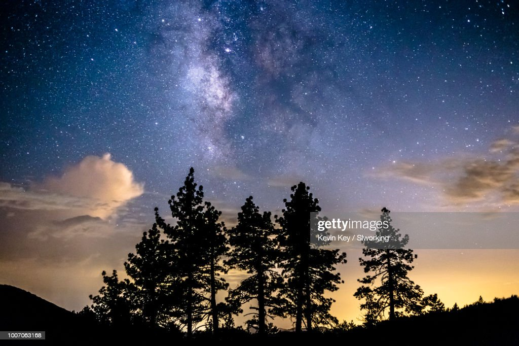 Milky Way over a group of pine trees : Stock Photo