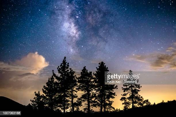 milky way over a group of pine trees - julian california stock photos and pictures