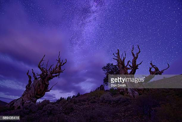 Milky Way over bristlcone pines