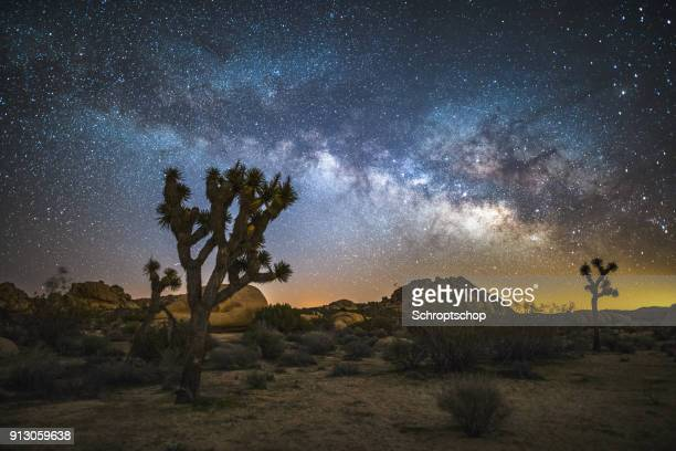milky way over joshua trees - joshua tree stock photos and pictures