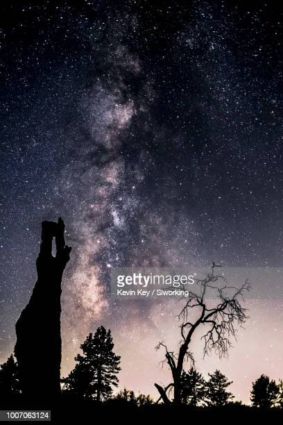 milky way over pine trees - julian california stock photos and pictures