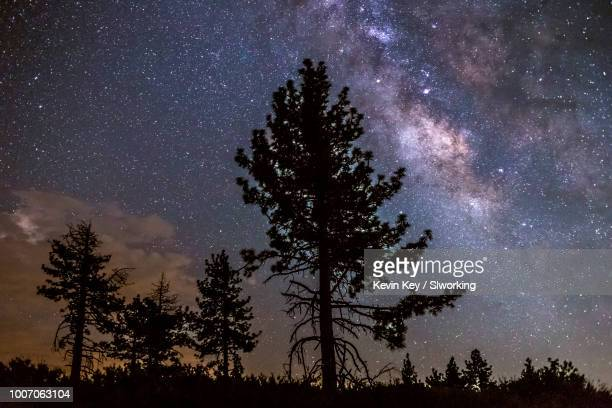 milky way over some pine trees - julian california stock photos and pictures