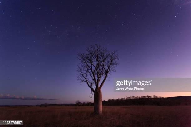 milky way, stars and night sky over a boab tree. parry lagoons nature reserve. the kimberley. western australia. - western australia stockfoto's en -beelden