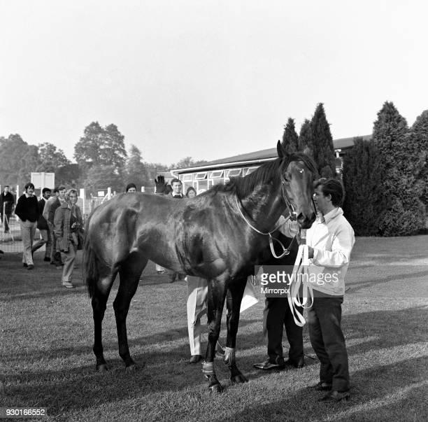 Mill reef at Newbury racecourse, jockey Geoff Lewis, 19th September 1971.
