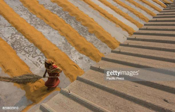Mill workers dry millions of grains of rice at a mill in the hot sun Mill workers work for eight hours a day in the boiling heat making sure the rice...