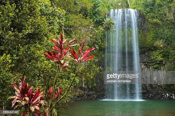 millaa millaa falls, atherton tableland - atherton tableland stock pictures, royalty-free photos & images
