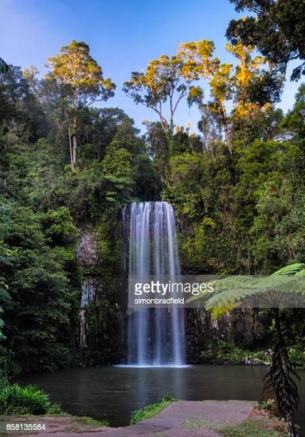 millaa millaa falls, queensland, australia - atherton tableland stock pictures, royalty-free photos & images
