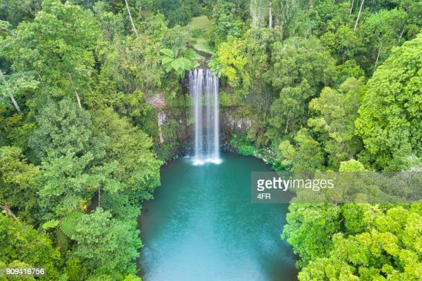 millaa millaa falls, queensland, australia - tropical tree stock pictures, royalty-free photos & images