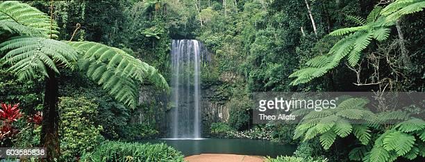 millaa millaa waterfall, australia, queensland, atherton tableland - atherton tableland stock pictures, royalty-free photos & images
