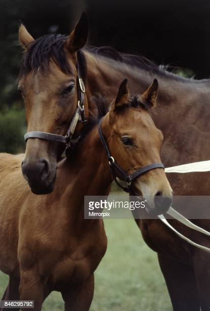 Millavera and her three months old filly foal Flashdance August 1983