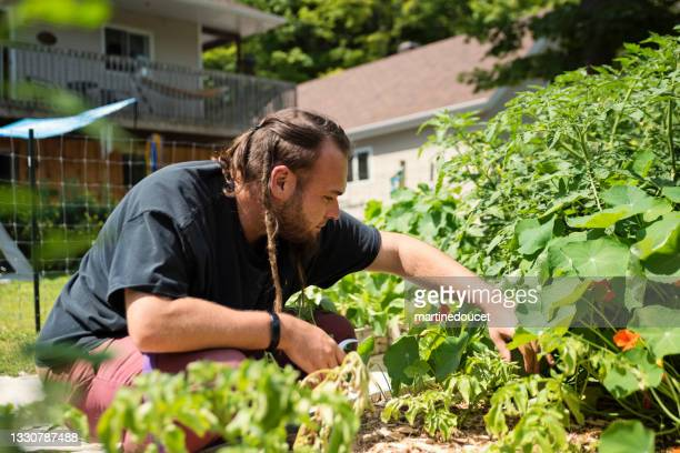 """millennial man harvesting nasturtium in permaculture garden. - """"martine doucet"""" or martinedoucet stock pictures, royalty-free photos & images"""