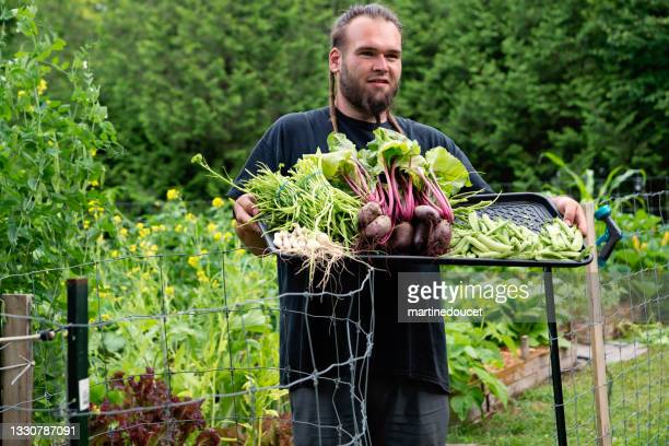 """millennial man proud of his harvest in permaculture garden. - """"martine doucet"""" or martinedoucet stock pictures, royalty-free photos & images"""