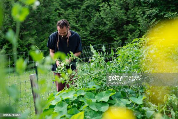 """millennial man working in permaculture garden. - """"martine doucet"""" or martinedoucet stock pictures, royalty-free photos & images"""