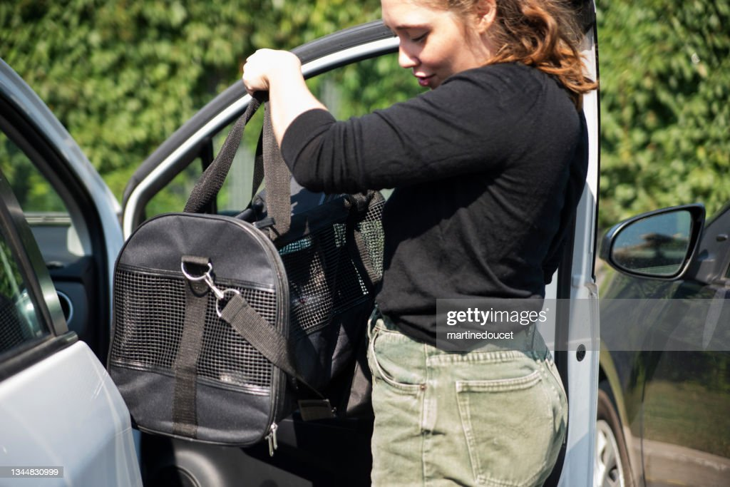 Millennial woman and newly adopted kitten in pet carrier in car. : Stock Photo
