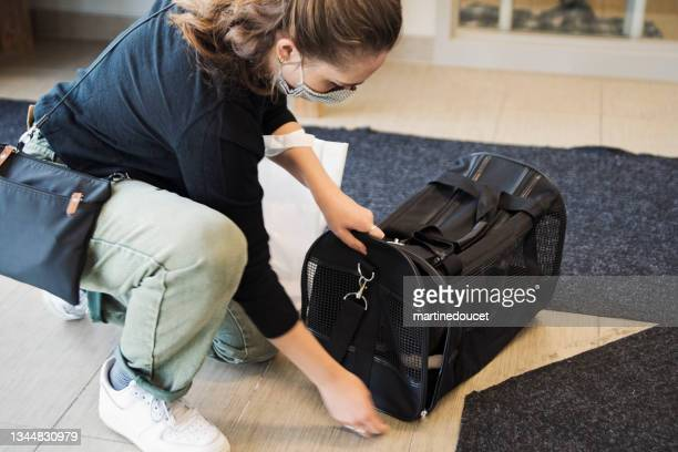"""millennial woman putting newly adopted kitten in pet carrier. - """"martine doucet"""" or martinedoucet stock pictures, royalty-free photos & images"""
