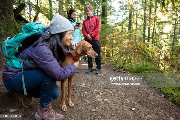 millennials using mobile mapping app with vizsla dog in forest - pacific northwest stock pictures, royalty-free photos & images