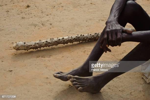 Millet harvest : farmer using a thorny stick for threshing millet ( Bastar region, India)