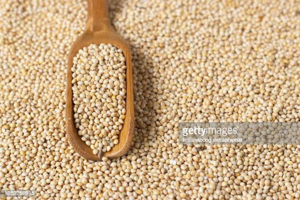 millet - millet stock pictures, royalty-free photos & images