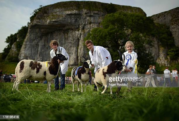 Millie Moore age 6 and cousins Jack and Liam stand with their multi prizewinning Jacob sheep from Three Gables Farm in Beadale during the Kilnsey...