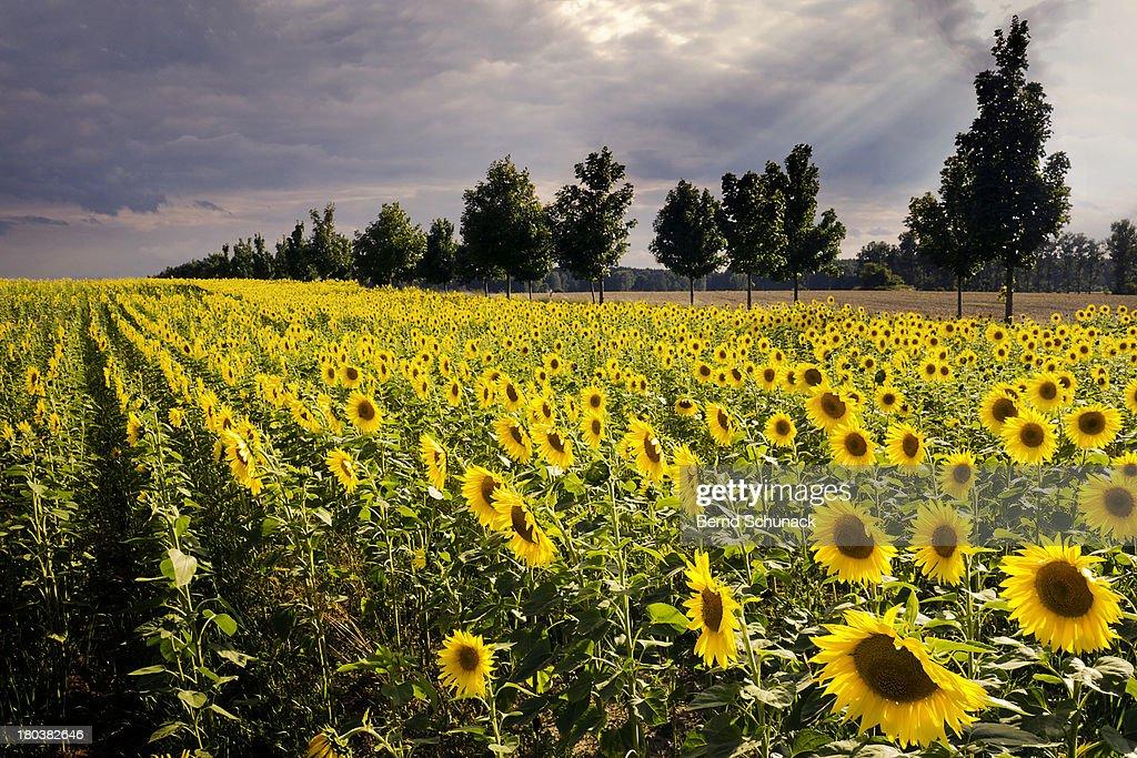 A Million Suns : Stock Photo