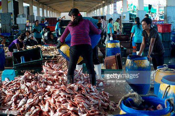A migrant worker unloading fish on the mainland in Phuket Every year hundreds of thousands of tourists come to Thailand But in the shadow of mass...