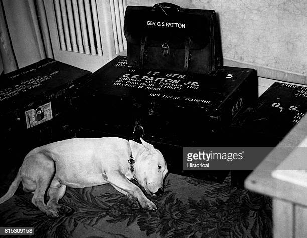 Millions mourned the American hero General George S Patton after his death in a car accident Patton's dog Willie lies here among his master's things...