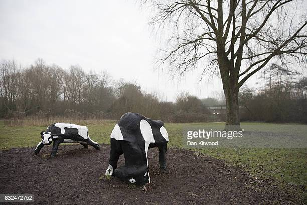 Milton Keynes' famous Concrete Cows sculpture created by Canadian artist Liz Leyh in 1978 stand on the outskirts of the town on January 23 2017 in...