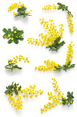mimosa assortments for Women's Day
