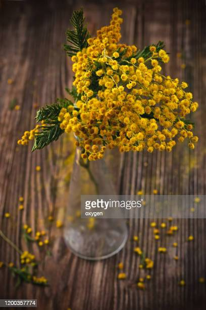 mimosa in glass vase on dark wooden background - mimosa fiore foto e immagini stock