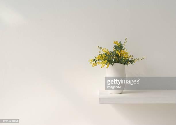 mimosa pudica in pot - mimosa fiore foto e immagini stock