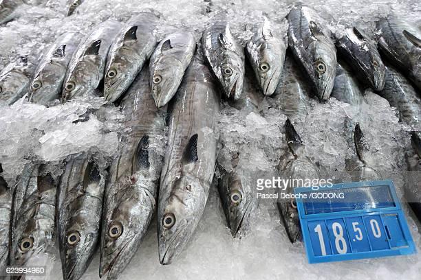 Mina port fish market, Abu Dhabi