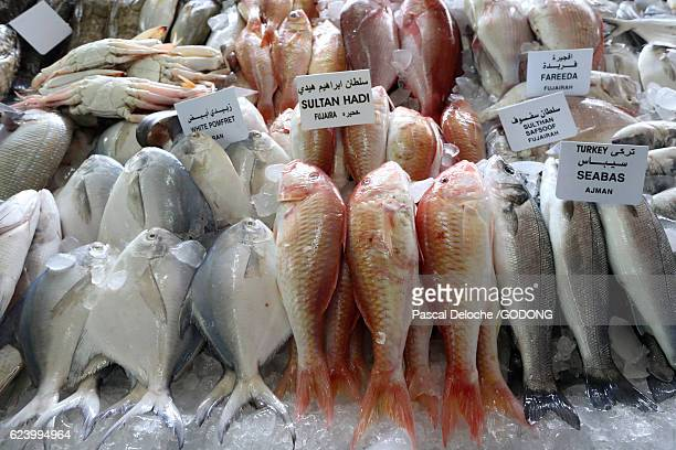 mina port fish market, abu dhabi - poisson stock photos and pictures