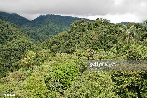 mindo cloud forest - ecuador fotografías e imágenes de stock