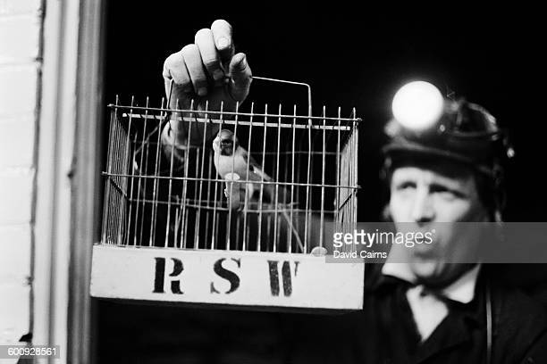 A miner holding a canary in a birdcage 16th February 1970 Used to warn miners of dangerous gases the birds are now kept in a perspex cage with an...