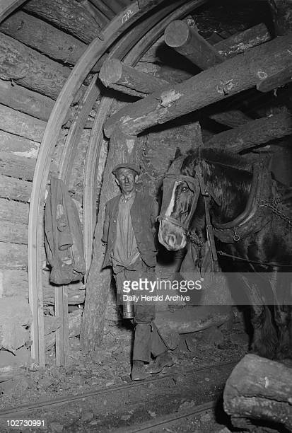 Miner with pit pony South Wales 1931 A photograph of a coalminer with a pit pony taken by James Jarche for the Daily Herald newspaper on 24 June 1931...