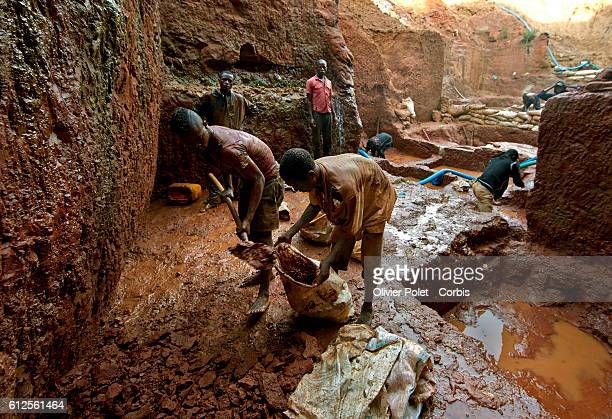 Miners fill bags with excess earth out of theirs concession surrounded by hoses pumping out the rain water from their plots 28 March 2013 near an...