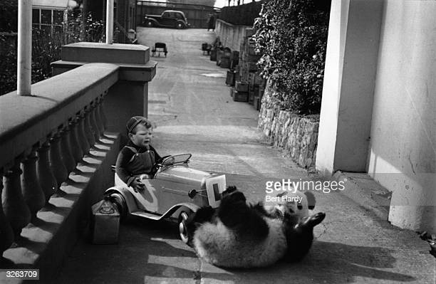 Ming the panda bear rolls on the ground while a little boy watches Original Publication Picture Post Our Favourite Invalid pub 1950