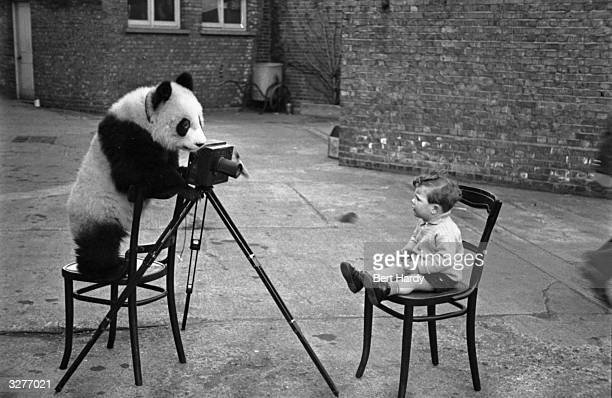 Ming the panda taking a photograph of photographer Bert Hardy's son Mike Original Publication Picture Post Our Favourite Invalid pub 1950