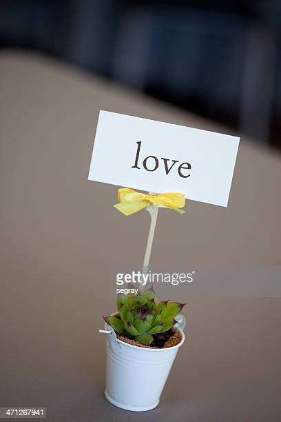 """Mini cactus con'amore"""" accesso"""